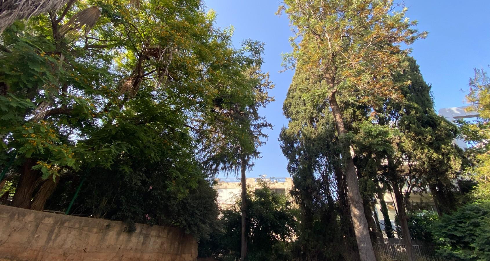 העצים המיועדים לכריתה ברחוב אבן אודם